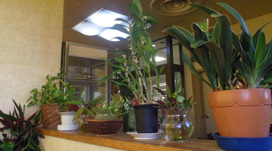 ジャングルな観葉植物が喫茶店にありました
