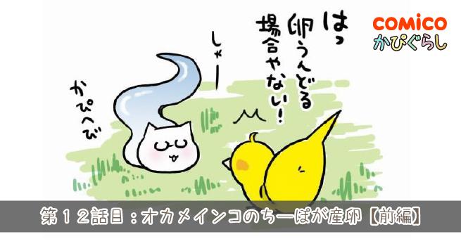 第12話目:オカメインコのちーぽが産卵【前編】